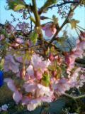 もう春なんて