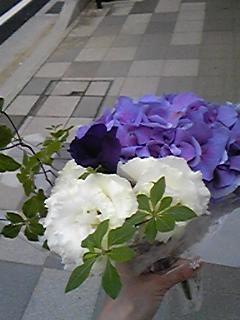 紫陽花見納めですよ