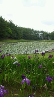 宮崎で6月を迎える